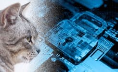 Blockchain For Cats? You're Kitten Me!